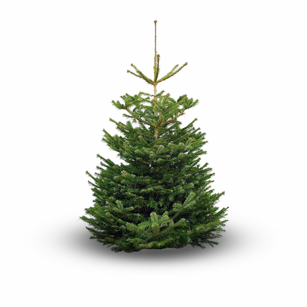 a guide to tree types - Real Christmas Tree Prices