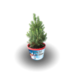Mini Xmas tree [2]